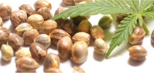 semi cannabis 520x245 - Una panoramica sulla normativa dei semi di cannabis